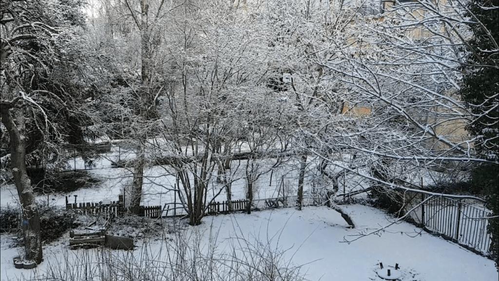 朝起きたときの雪景色